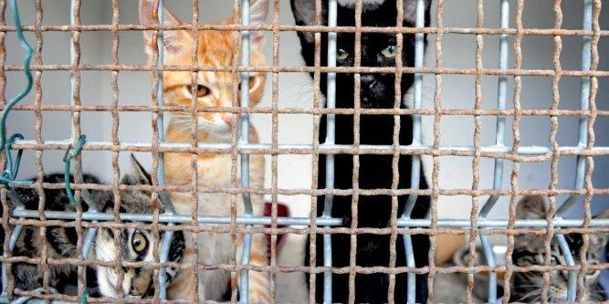 dix-huit-chats-et-dix-chatons-occupent-le-refuge_977376_667x333