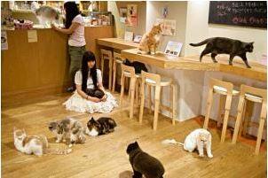 bar à chat