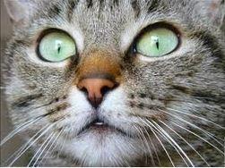 regard du chat