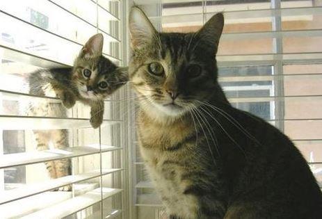 comportement chat