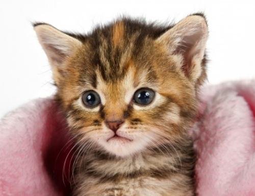 Les idées reçues en 10 Questions sur vos chats