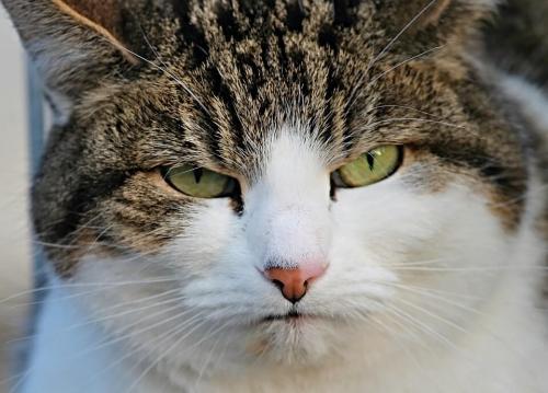 litière de chat